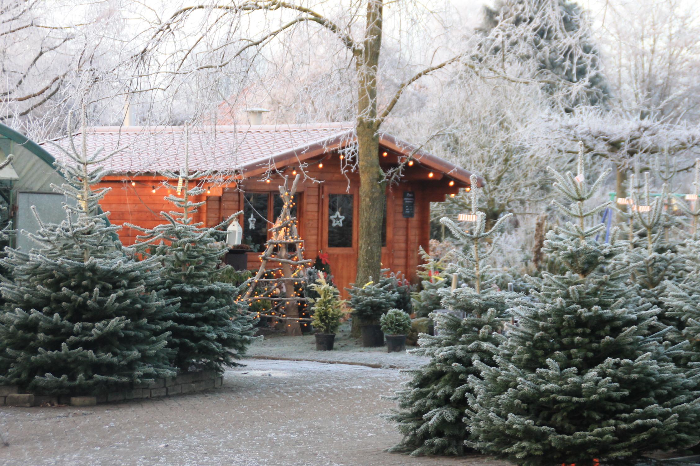 Allgemein W Fokken Baumschulen Gbr Und Gartenbau